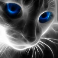 Blueyescat