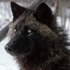 View Harl_Windwolf's Profile