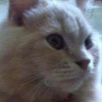 kucingbelang4