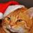 Catman8976