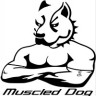 Muscled_Dog
