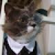 Rufus Cat
