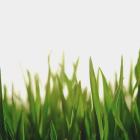 View Grassy756's Profile