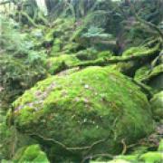 Hidenori Sugiyama