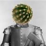 tinmancactus