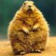 Origitalus's avatar
