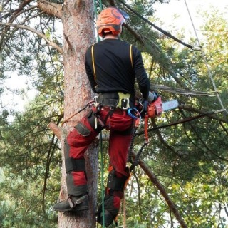 TreeSurgeonsExperts.co.uk