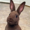 Boss Rabbit