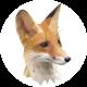 Max Amanshauser's avatar