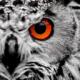 EvilOwl