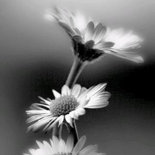 Poetry's Passion ツ
