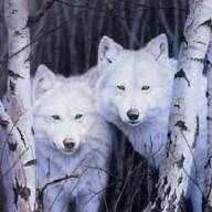 Spirit Wolfe