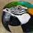 pollytheparrot