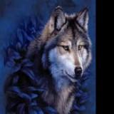 Wolf6120