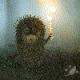 Velqinean's avatar