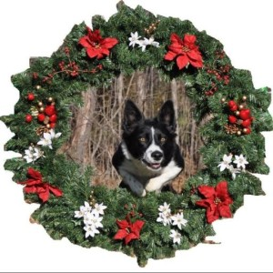 Profile picture for TNT Border Collies