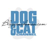 Blog yêu chó mèo
