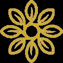 indokombucha