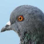 Jon Pigeon