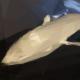 Jonah Duckles's avatar