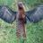 FlyingMongoose