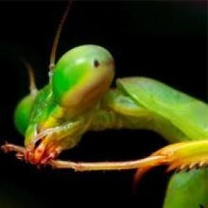 entomologmax
