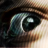Dmitri Sotnikov's avatar