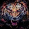 Leopardus91