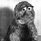 royaljester's avatar