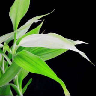 bambusasolutions
