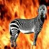 HP Fire Gengar - last post by BurntZebra