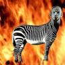 BurntZebra