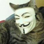 Signor Gatto