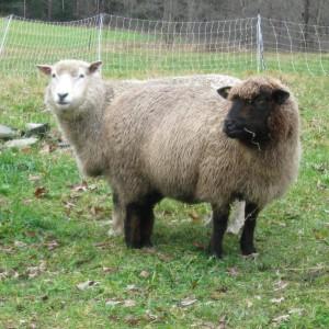 sheepandpickle