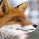 ChiffaFox's avatar