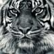 srz_zumix's avatar
