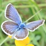 Avatar thepaperbutterfly