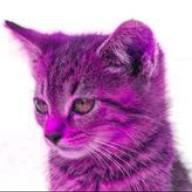 purplesword