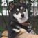 westomopresto's avatar