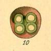 mrosenschein's icon