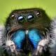 callmesalticidae