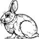 View rabbit314's Profile