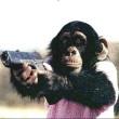 Monkeys_Factor