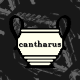 cantharus