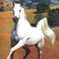 avatar of sparky