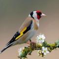 Portrait de the little bird