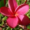 Angélica Mustiola