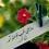 گراواتار برای محمود دبستانی