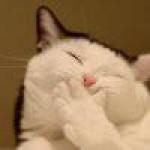 catcraftsmo
