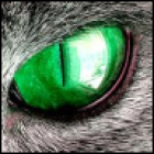 View LazyLeopard's Profile